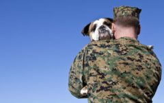 Dogs have saved countless lives alongside servicemembers and first responders.